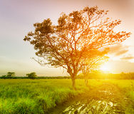 A Tree At Sunset Time. Stock Images
