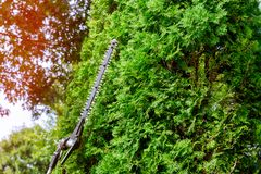 A Tree Surgeon Worker Using A Power Hedge Trimmer To Cut Back A Large Overgrown Bush. Royalty Free Stock Photos