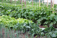 Free A Vegetable Garden Royalty Free Stock Images - 9586289