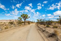Free A View In Joshua Tree National Park, California Stock Images - 146625164
