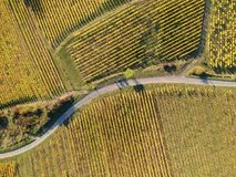 Free A View Over A Vineyard At Alsace France In Autumn Light Royalty Free Stock Photography - 145931287