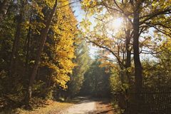 Free A Walk Among Colors Stock Image - 131700291