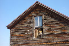 Free A Watch-dog Barking From A Window Stock Photo - 42676140