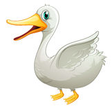 A White Fat Duck Stock Images