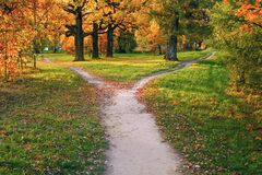 Free A Wide Trail Strewn With Fallen Autumn Foliage Is Divided Into Two Paths That Diverge In Different Directions. Autumn Landscape Royalty Free Stock Image - 211892196