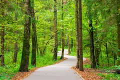 A Winding Asphalt Path In The City Park Royalty Free Stock Photography