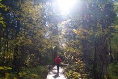 Free A Woman Hiker Walking Along A Boardwalk At North Cascades National Park Stock Image - 92086581
