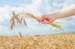 A Woman Holding A Stack Of Wheat Stock Photos