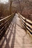 A Wooden Footpath In The Woods In The Springtime