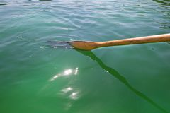 A Wooden Oar In The Green Water Royalty Free Stock Photos