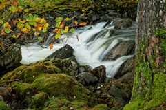 A Woodland Waterfall Stock Images