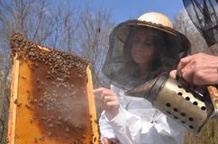 Free A Young Girl Beekeeper In Apiary Stock Photos - 30525133