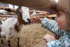 Free A Young Girl Feeding Goat. Royalty Free Stock Photography - 48113597