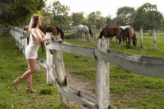 Free A Young Girl With A Horse Royalty Free Stock Photo - 87313935