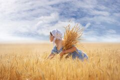 Free A Young Woman In A Wheat Field With Ears In Her Hands, A Sunny Summer Morning Royalty Free Stock Photos - 225715688