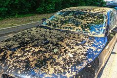 Car covered with tree seeds. Royalty Free Stock Photography