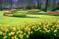 Açafrão, jardim dos Tulips Fotografia de Stock