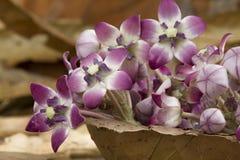 Aak-Blume Stockbilder