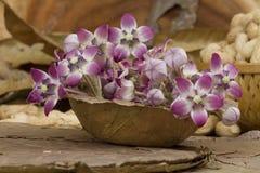 Aak-Blume Stockfotos