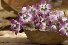 Aak-Blume Stockfoto