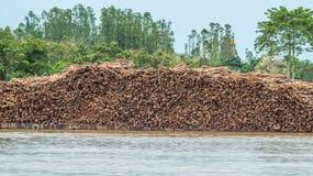 Aakhoogtepunt van hout royalty-vrije stock fotografie