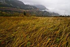 Aal-Gras, Squamish-Fluss-Mündung Stockfotografie