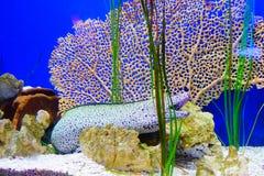 Aal und Meerespflanze Stockfotos