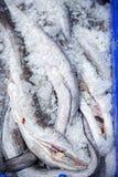 Aale im Behälter auf Fischmarkt Lizenzfreies Stockbild