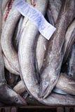 Aale im Behälter auf Fischmarkt Lizenzfreie Stockbilder