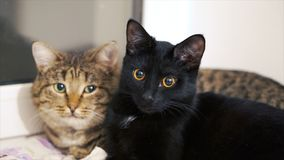 Aalen sich schöne Katze zwei in der Sonne auf dem Fensterbrett clip Zwei Katzen zu Hause auf dem Fensterbrett Lizenzfreies Stockfoto