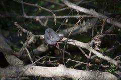 Aalende Breit-mit einem Band versehene Wasser-Schlange bereit Moult Lizenzfreie Stockfotografie