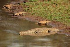 Aalende Nil-Krokodile Lizenzfreie Stockfotografie