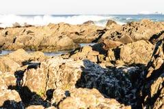Aalende Pelzrobben in Neuseeland-Küste Lizenzfreie Stockfotografie