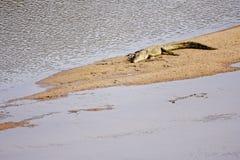 Aalendes Krokodil Lizenzfreie Stockfotos