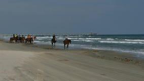 AALMOEZENIEReiland, TX - 13 FEBRUARI 2015: Vrouwen die paarden berijden op strand langs de Golf van Mexico stock video