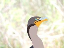 Aalscholver Digitale Illustratie op Naturalistische Achtergrond - het Nationale het Parkwild van Florida Everglades stock illustratie