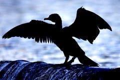 Aalscholver, silhouet Royalty-vrije Stock Fotografie
