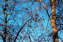 Aalscholvers op de bomen royalty-vrije stock afbeeldingen