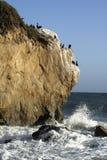 Aalscholvers op de rots Stock Foto