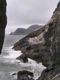 Aalscholvers op de rotsen royalty-vrije stock afbeelding