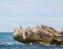 Aalscholvers op Kalksteen Stock Afbeeldingen