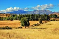 Aan de kant is groene weg van bomen Royalty-vrije Stock Fotografie