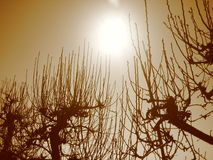 Aan de zon Stock Fotografie