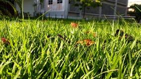 Aan elk groen gras, een zon royalty-vrije stock foto