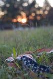 Aan flarden vlag bij zonsondergang Stock Afbeelding