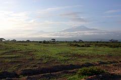 Aan Kilimanjaro Stock Fotografie