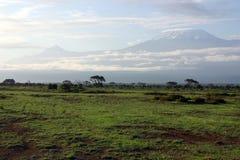 Aan Kilimanjaro Stock Afbeeldingen