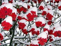 Aan ons is warmer onder sneeuw Royalty-vrije Stock Foto