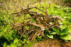 Aan ontwortelde boom die in het hout bepalen royalty-vrije stock afbeelding