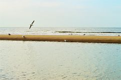 Aan Zee Strand Wijk, Holland Lizenzfreie Stockbilder